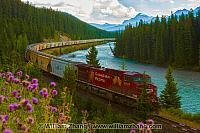 Canadian Pacific freight train at Morant's Curve. Banff, Alberta