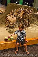 Child sits at edge of dinosaur exhibit at Royal Tyrrell Museum