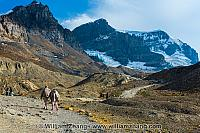 Trail at Columbia Icefield leads to edge of glacier. Alberta