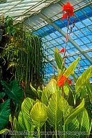 Interior of Conservatory of Flowers. San Francisco