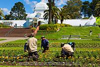 Gardeners at work at Conservatory of Flowers. San Francisco, CA