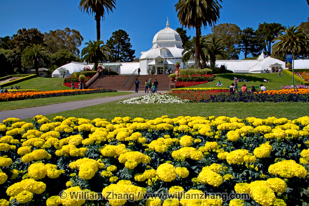 yellow flower bed near conservatory of flowers in golden gate pa